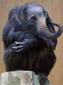 Monkey Elephant
