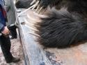 Bear Claws  2