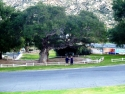 Rivera Oaks Resort  10