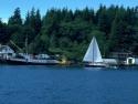 Sail Boats 116