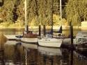 Sail Boats 217