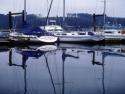 Sail Boats 219