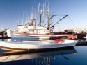 Sail Boats 25