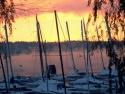 Sail Boats 81