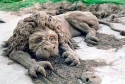 Sand Sculpiture Lion