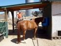 Tony's Place Horse