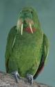 Walrus Bird