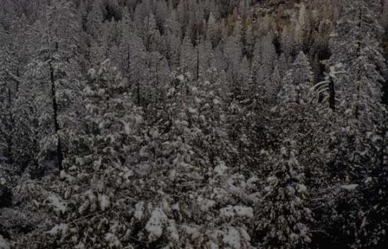 Winter Scene 018