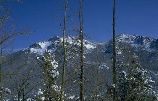 Winter Scene 021