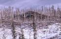 Winter Scene 025