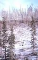 Winter Scene 029