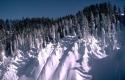 Winter Scene 030
