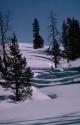Winter Scene 031