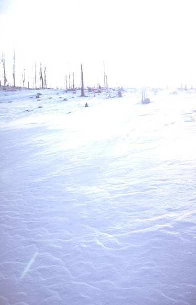 Winter Scene 032