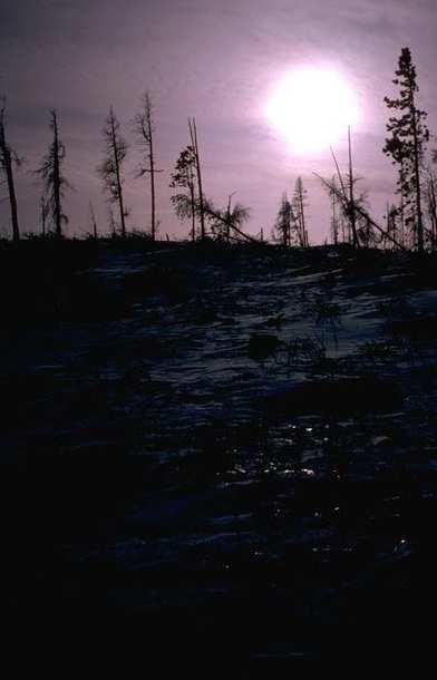 Winter Scene 034