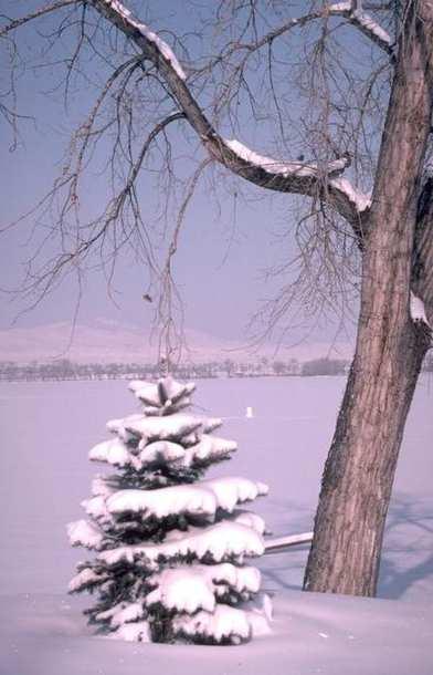 Winter Scene 036