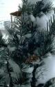 Winter Scene 054