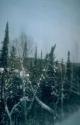 Winter Scene 055