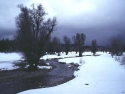 Winter Scene 240