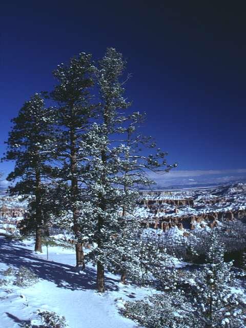 Winter Scene 282