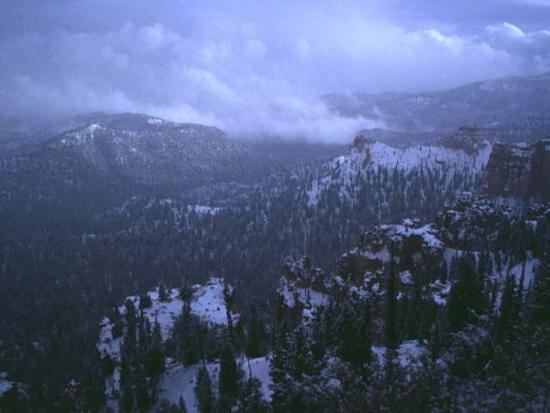 Winter Scene 286