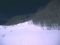 Winter Scene 289