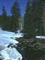 Winter Scene 290
