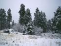 Winter Scene 294