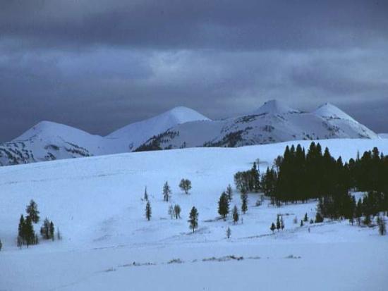 Winter Scene 298