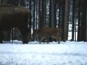 Winter Scene 299